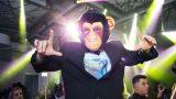 קופים מרקדים